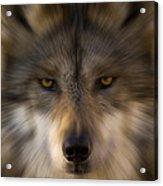 Eyes Of The Beast Acrylic Print