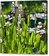 Fabulous Water Hyacinth  Acrylic Print
