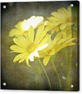 Faded Yellow Acrylic Print