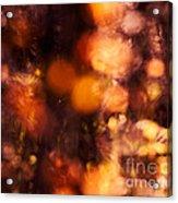 Fading Fall Flame Acrylic Print