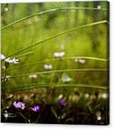 Fairy Meadow Acrylic Print