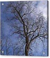 Fairy Tale Tree Acrylic Print