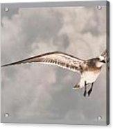 Faith On A Wing Acrylic Print