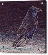 Faithful Raven Acrylic Print