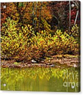 Fall Along West Fork River Acrylic Print