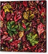 Fall Autumn Leaves Acrylic Print by John Farnan