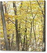 Fall Beginning  Acrylic Print