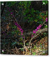 Fall Berries Acrylic Print