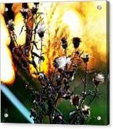 Fall Blooms Acrylic Print