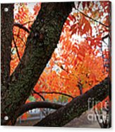 Fall Branches Acrylic Print