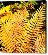Fall Color Cinnamon Fern Acrylic Print