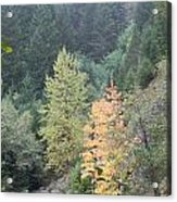 Fall Color In The Trees Acrylic Print
