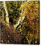 Fall Color Wall Art Landscape Acrylic Print
