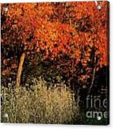 Fall Colors 2 Acrylic Print