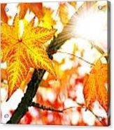 Fall Colors Acrylic Print
