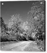 Fall Colors In Black And White Acrylic Print