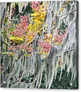 Fall Colors In Spanish Moss Acrylic Print