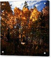 Fall Colors Taylor Creek. Acrylic Print