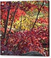 Fall Comes To New England Acrylic Print