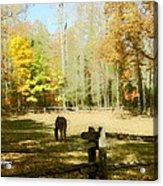 Fall Corral Acrylic Print
