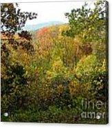 Fall Delight 7 Acrylic Print