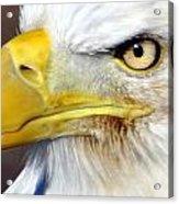 Fall Eagle 3 Acrylic Print