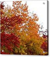 Fall Filled Sky Acrylic Print