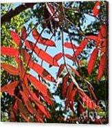 Fall Fingers Acrylic Print