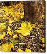 Fall Floor Acrylic Print