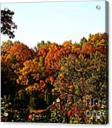Fall Foliage And Roses Acrylic Print