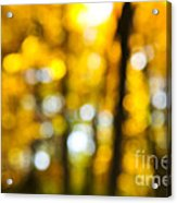 Fall Forest In Sunshine Acrylic Print