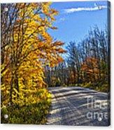 Fall Forest Road Acrylic Print by Elena Elisseeva