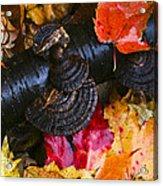 Fall Fungi Acrylic Print