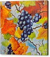 Fall Grapes Acrylic Print by Carole Powell