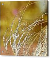Fall Grass Acrylic Print by Artist and Photographer Laura Wrede