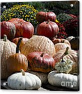 Fall Harvest Colorful Gourds 7965 Acrylic Print