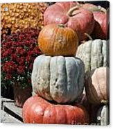 Fall Harvest Colorful Gourds 7968 Acrylic Print