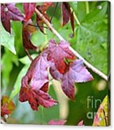 Fall Has Begun Acrylic Print