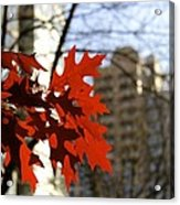 Fall In The City 2 Acrylic Print