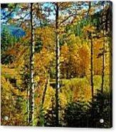 Fall In The Sierras Acrylic Print by Helen Carson