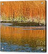 Fall In Yellowstone National Park Acrylic Print