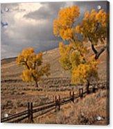 Fall In Yellowstone Acrylic Print