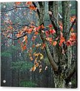 Fall In Your Face Acrylic Print