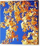 Fall Is In The Air Acrylic Print