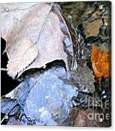 Fall Leaf Abstract Acrylic Print