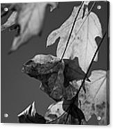 Fall Leaf Light Acrylic Print