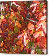 Fall Leaves - Digital Art Acrylic Print