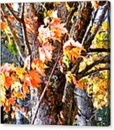 Fall Leaves 2 Acrylic Print