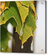 Fall Leaves And Icicles Acrylic Print by Cynthia  Cox Cottam