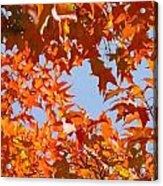 Fall Leaves Art Prints Autumn Red Orange Leaves Blue Sky Acrylic Print